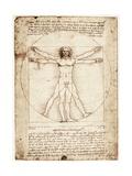 Vitruvianischer Mensch Kunstdruck von  Leonardo da Vinci