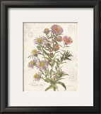 September Aster Print by Katie Pertiet