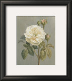 Heirloom White Rose Prints by Danhui Nai