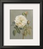 Heirloom White Rose Prints by Danhui Nai