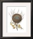 Antique Bird's Nest II Posters by James Bolton