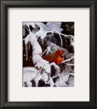 Winter Refuge Prints by Alan Sakhavarz