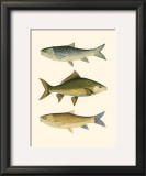 Antique Fish I Art by Ernest Briggs