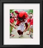 The University of Arkansas Razorbacks Mascot 2008 Framed Photographic Print