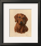 Miniature Dachshund Prints by Judy Gibson