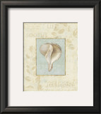 Soothing Words Shells IV Prints by Lisa Audit
