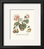 Geraniums Posters by Victoria Morland