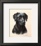 Labrador Art by Judy Gibson