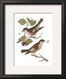 Antique Bird Pair I Prints by James Bolton