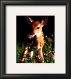 Fawn Prints
