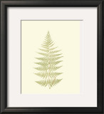 Lowes Fern V Posters by Edward Lowe