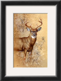 White Tailed Deer Prints by Judy Gibson