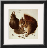 Squirrels Prints by Albrecht D&#252;rer