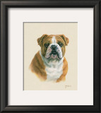 English Bulldog Print by Judy Gibson