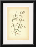 Grasses I Print by Edward Lowe