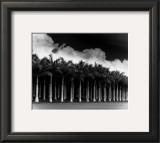 White Palms, Costa Rica Prints by Monte Nagler