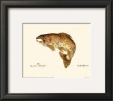 Brown Trout Posters by Teri Renee Blehm