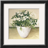 White Jasmine Print by  Galley