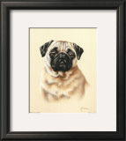 Pug Posters by Judy Gibson