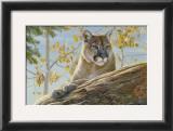 Front Range Cougar Art by Kalon Baughan