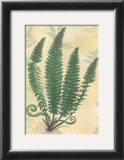 Forest Sword Fern Prints by Walter Robertson