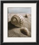 Seashell I Posters by Sondra Wampler