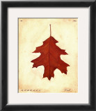 Oak Leaf Print by Meg Page