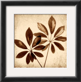 Cassava Leaves Prints by Michael Mandolfo