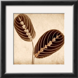 Maranta Leaves Print by Michael Mandolfo