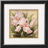 Pretty in Pink Irises Art by Igor Levashov