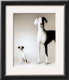 Domino and Daisy Posters by Amanda Jones