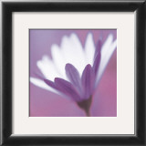 Purple Flower Prints by Prades Fabregat
