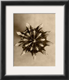 Sepia Botany Study IV Art by Karl Blossfeldt