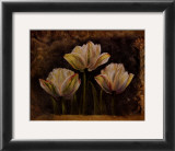 Triple Tulip II Prints by Rumi 