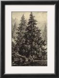 Spruce Pine Posters by Ernst Heyn