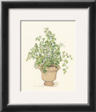 Green Plant in a Clay Pot Print by Cappello