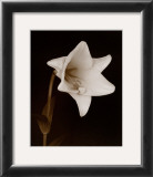 White Flower Prints by Prades Fabregat