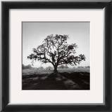 Oak Tree, Sunrise Art by Ansel Adams