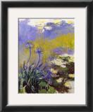 Los agapantos Posters por Claude Monet