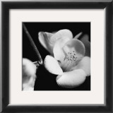 Quince Blossoms V Posters by Renee Stramel