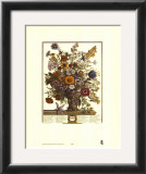 Twelve Months of Flowers, 1730, November Prints by Robert Furber