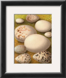 Bird Egg Collection III Posters
