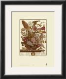Twelve Months of Flowers, 1730, August Posters by Robert Furber