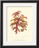 Scarlet Oak Prints by  Sprague