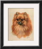 Pomeranian Posters by Judy Gibson