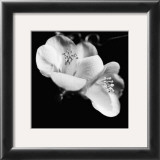 Quince Blossoms VI Posters by Renee Stramel