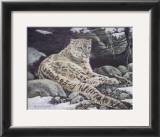 Awake Snow Leopard Posters by Alan Sakhavarz