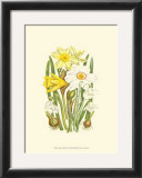 Summer Garden I Prints by Anne Pratt