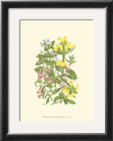 Summer Garden XI Prints by Anne Pratt
