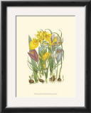 Summer Garden III Prints by Anne Pratt